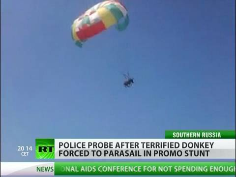 Flying donkey shocks beachgoers in Russia's south